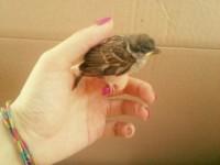 birdy_3